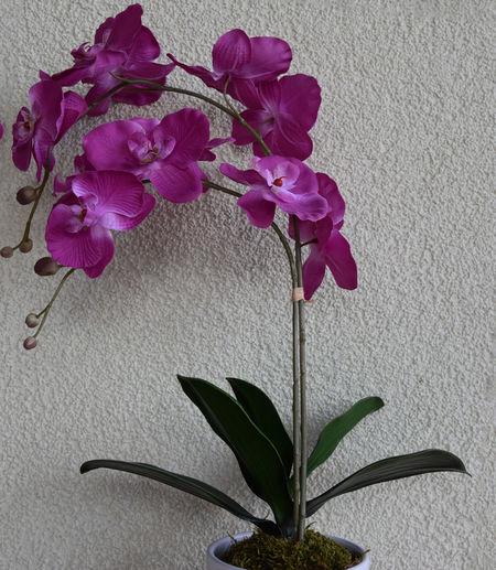 Artificially Artificially Flower Artificially Orchid Flower Artificially Flower Synthetic Orchid Orchid Artificially Orchid Flower Orchid Synthetic Orchidea Orchidee Pink Pink Color Synthetic Synthetic Flower Synthetic Orchid
