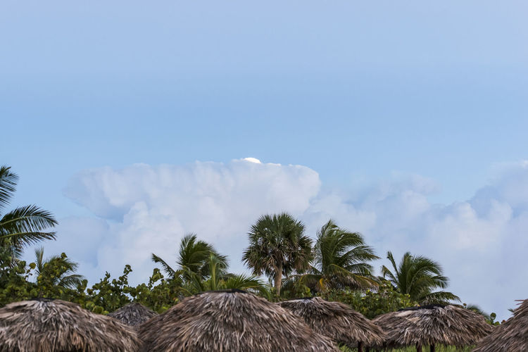 Thatched roof parasols against blue sky