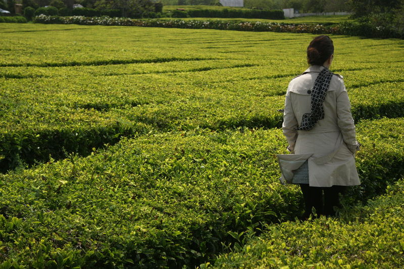 Adult Adults Only Agriculture Beauty In Nature Casual Clothing Field Grass Growth Leisure Activity Nature One Person Outdoors Plant Plantation Real People Rear View Standing Tea Plantation  Tea Production Walk In The Fields Walking Women Young Women