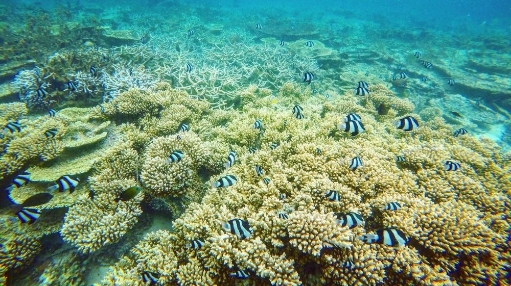 Tropical Paradise Coral Underwater Sea Life Beauty In Nature Island Lifestyle Snorkeling Lagoon Seascape
