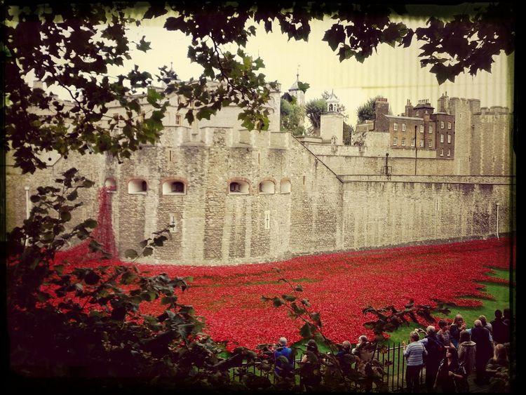 Reminder Toweroflondon London Flowers