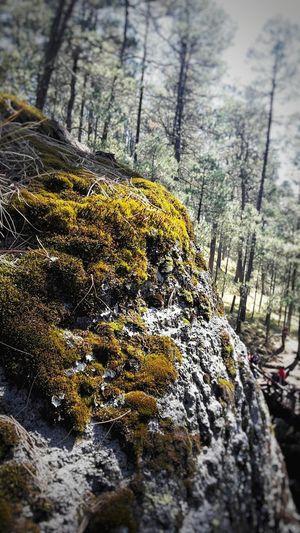 wet rock Mossy