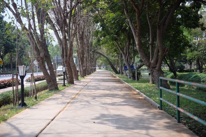 walkway Tree Nature Outdoors The Way Forward No People Day Pathway Walking Path Cement Park Garden Environment Sunlight Day Outdoor