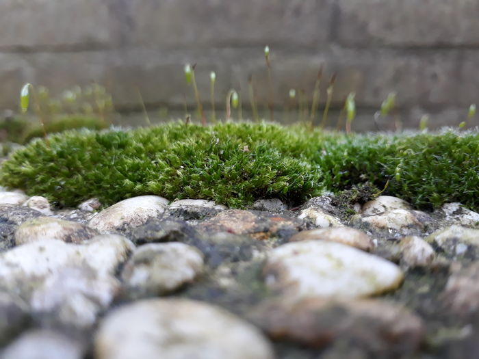 Micro world. Green Garden EyeEm Selects Nature Beauty In Nature