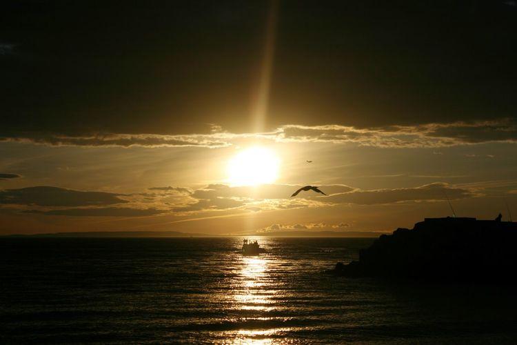 Sunset Silhouette Bird Flying Water Beauty In Nature Sunlight Horizon Over Water