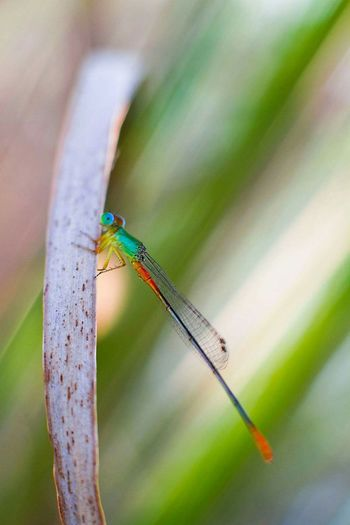 EyeEm Selects Insect Animal Wildlife One Animal Animals In The Wild Animal Themes Damselfly No People Close-up Green Color Day Outdoors Nature macro