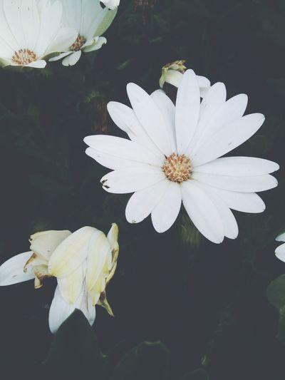 Flowers 🌼🌸🍃