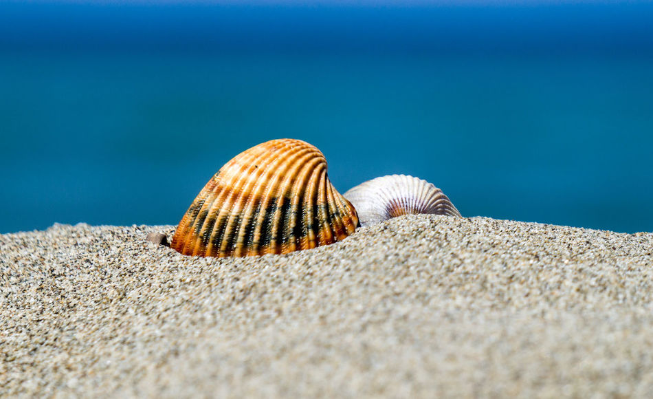 Beach Beauty In Nature Close-up Conchiglie Mare Nature Outdoors Sabbia Sand Sea Seashell