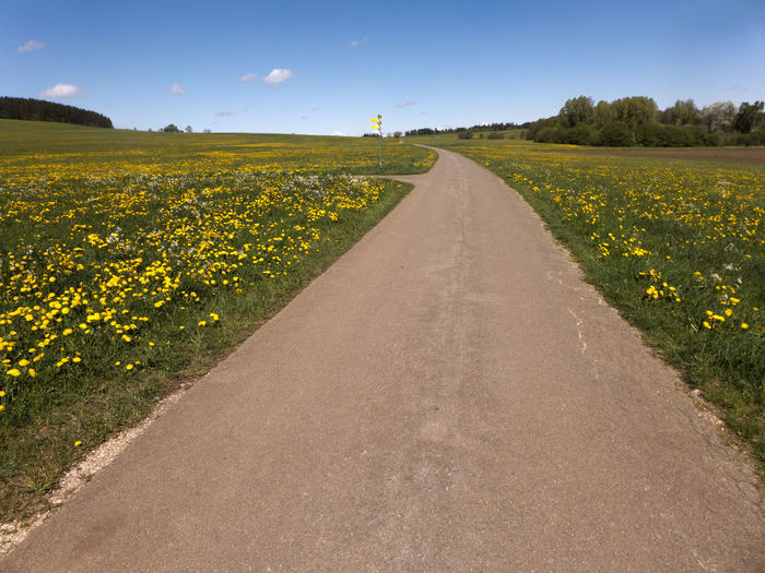 A hike in spring on the Albsteig on the Swabian Alb in southern Germany. A sea of flowers in yellow. The dandelion is blooming. Albsteig Balingen Grass Hiking Meadow Flowers Pasture Agriculture Dandelion Diminishing Perspective Direction Environment Field Flower Flowering Plant Growth Hiking Trail Landscape Meadow Plant Road Rural Scene Schwäbische Alb The Way Forward Transportation Yellow