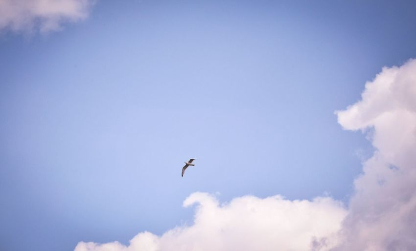 Flying high Bird Bird Photography Sky Sky And Clouds Blue Sky Peaceful Serenity Flying Flying High Flying Bird Flying In The Sky