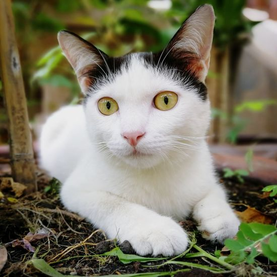 Close-up portrait of white cat on field