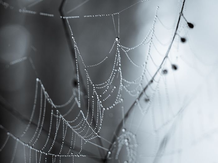 Close-up of dew drops on spider web