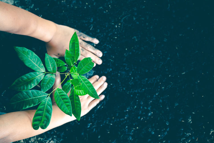 High angle view of hand holding leaves in swimming pool