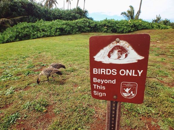 Bird Watching Unusual Signs Hawaii Kauai Travel Road To 50 Make Moments