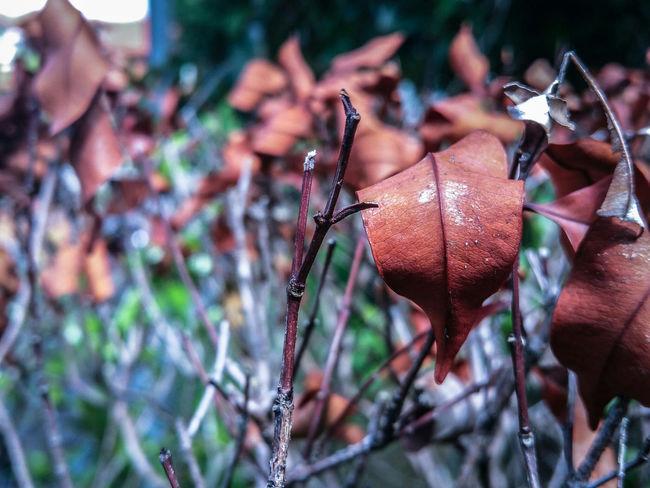 Jindagee jiyo Photography Leaves Plants Nature Beauty Love The Tourist