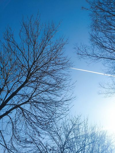 Tree Sky Beauty In Nature No People Nature Low Angle View Day Blue Outdoors Freshness