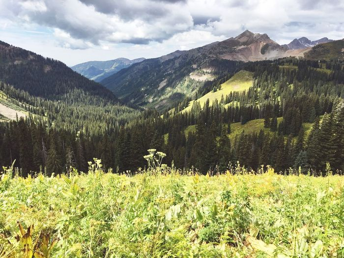 Plants growing on field against majestic mountains