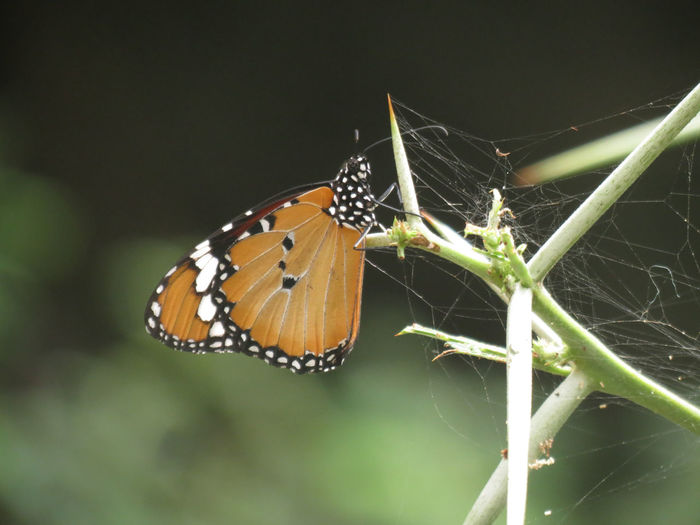 Close-up of butterfly on plants