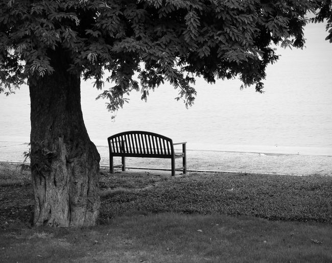 Plant Tree Nature Grass Trunk Tree Trunk Day Water No People Bench Land Growth Tranquility Seat Tranquil Scene Outdoors Field Branch Beauty In Nature Balck And White