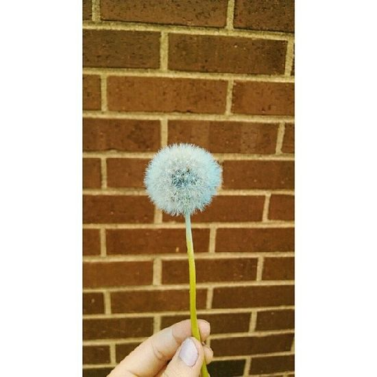 Blue dandelions and pink lips? is it me you're gonna miss??