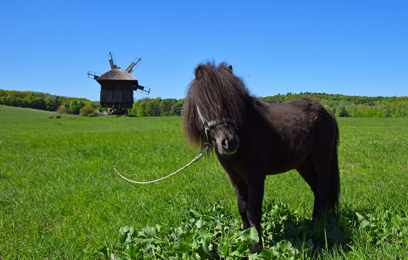 Pony standing on countryside landscape