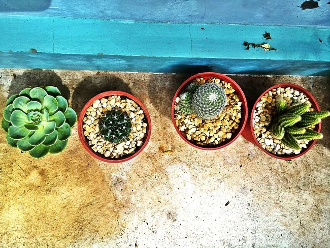 EyeEm Cactus Growing Plants My Plants I Love Cactus Cactusclub Cacti Plants 🌱 Planting Since I started working from home 2 years ago, I've been trying to take care of plants, cook, enjoy the outdoors and more. This Is Where I Live...