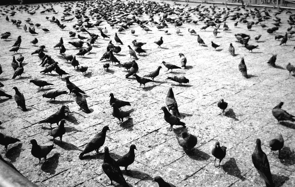 Beach Sand Outdoors Full Frame Sunlight Animal Themes Gatewayofindia Gateway Of India Tajhotelmumbai Taj Hotel Mumbai The Taj Mahal Palace Hotel Eyeemindia Beginnerphotographer Backgrounds EyeEm Best Shots Motorola Photography EyeEmBestEdits EyeEm Market © The Weekend On EyeEm Eyeemphotography Mobilephotography
