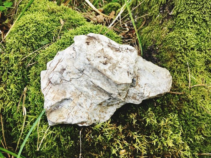 Stone Dog Animal Themes Dog Shillouette Dog Stone Dog Plant Grass Land Growth No People Nature Sunlight Outdoors Day Close-up White Color Beauty In Nature Tranquility Rock
