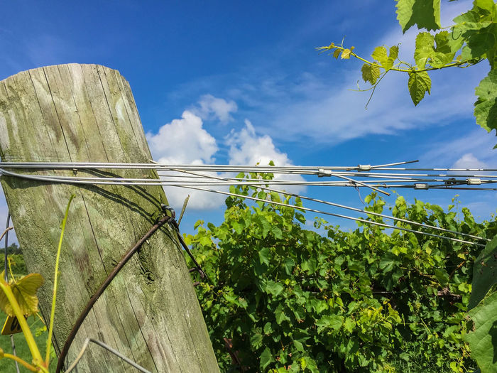 Crooked Post and Wire Agriculture Angle Backwards  Beauty In Nature Blue Cloud - Sky Crooked Day Growth Leaf Low Angle View Nature No People Outdoors Plant Post Renewable Energy Rural Scene Scenics Sky Stretching Tree Water Winery Wire