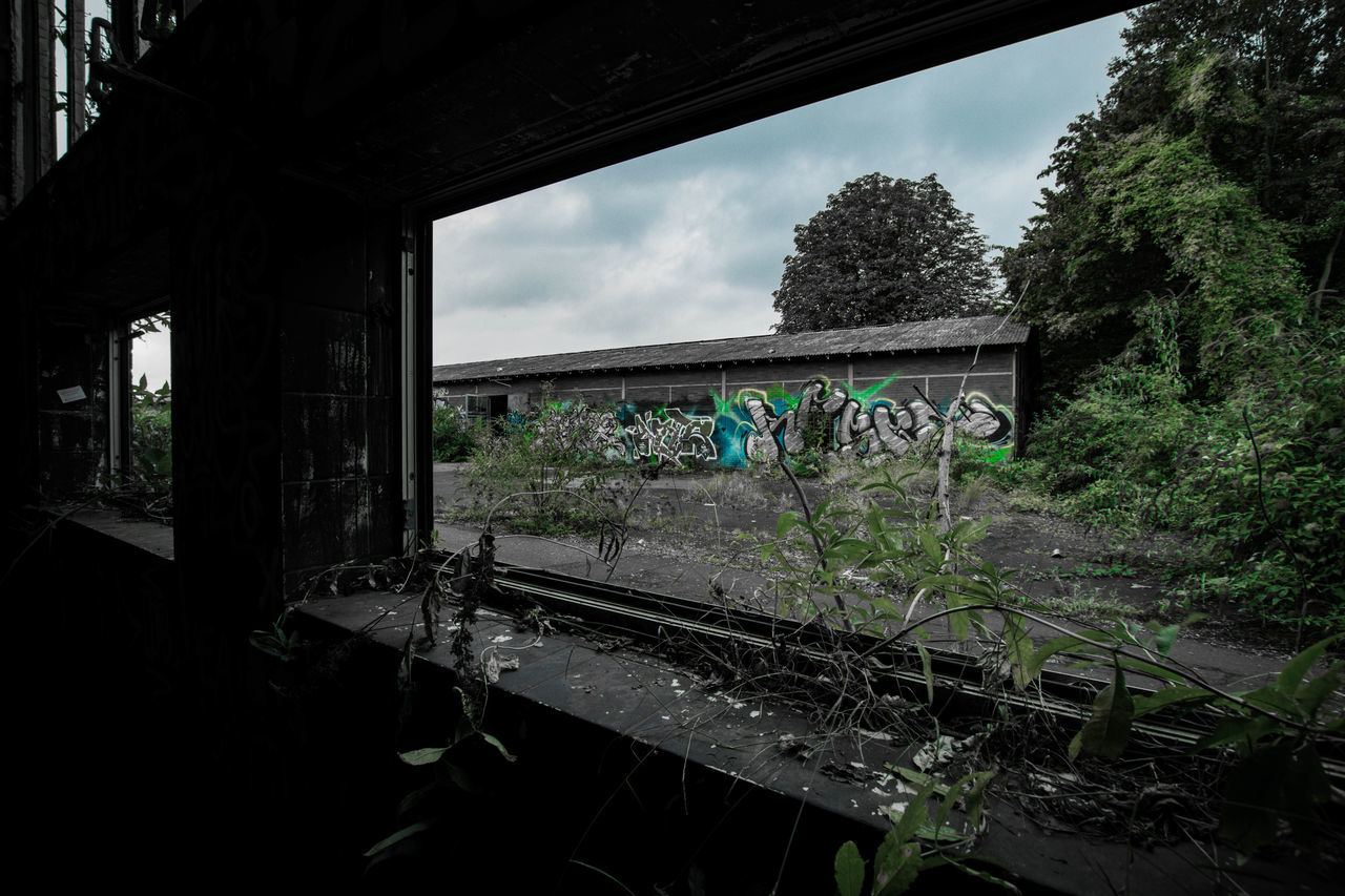 tree, nature, transportation, day, sky, plant, no people, window, abandoned, bridge - man made structure, architecture, built structure, growth, outdoors