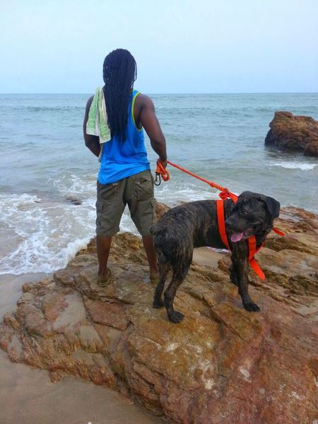 Concentrate Zeus Brindle Dog Big Dog Pedigree Sea Rocks Orange Color Dog Sea Pets One Animal Rear View Domestic Animals Real People Mammal One Person Leisure Activity Standing Horizon Over Water Water Pet Leash Outdoors Day Beach Walking Dog Lead Full Length