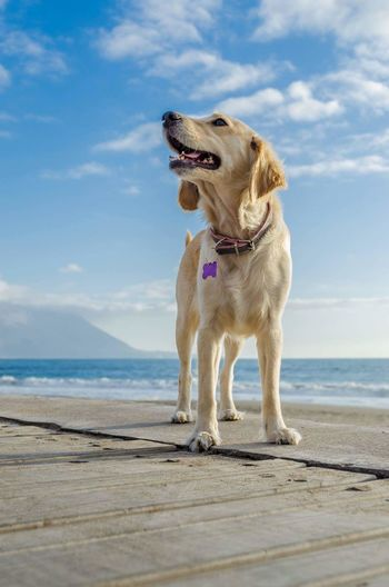 Close-Up Of Dog On Beach Against Sky