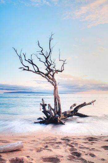Tree Bare Tree Tranquility Sky Hawaii Maui Ukumehame Beach Beach No People Branch Nature Dead Plant Sea Tree Trunk Dead Tree Tranquil Scene Outdoors Water Scenics Beauty In Nature Landscape Driftwood Horizon Over Water