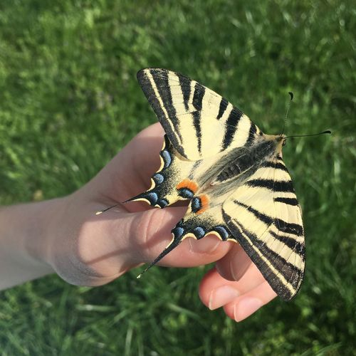 Butterfly Human Hand Hand Animal Themes Animal Wildlife One Animal Animal Insect Butterfly - Insect Beauty In Nature