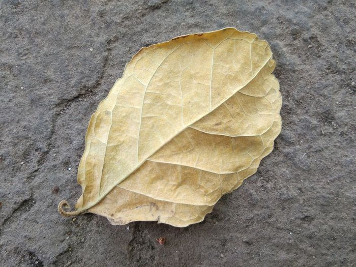 High angle view of leaf on concrete surface