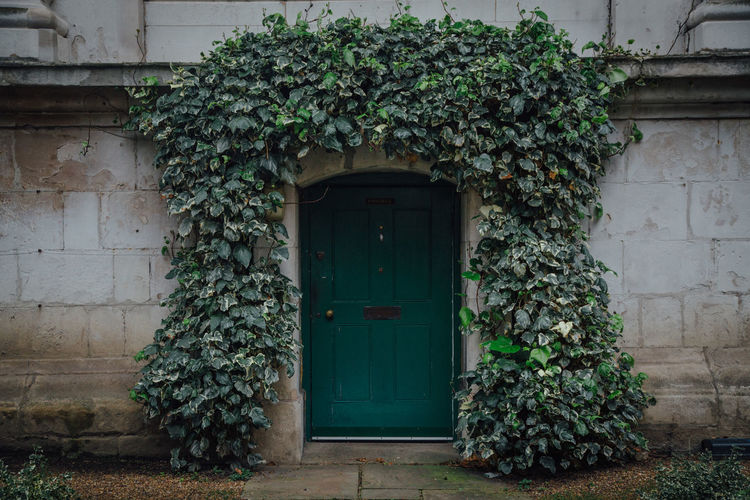 A ivy clad facade in Westminster, London, United Kingdom. Architecture Architecture Built Structure Church Closed Day Façade Green Green Color Growing Growth Ivy London Nature No People Outdoors