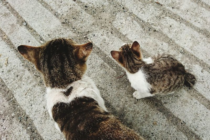 High angle view of cats sitting on street