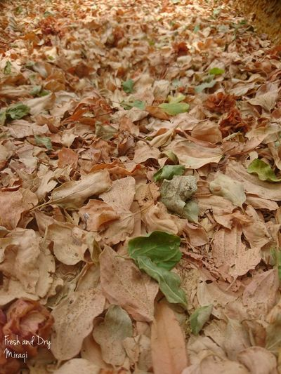 Leaf Outdoors Nature High Angle View Fresh And Dry