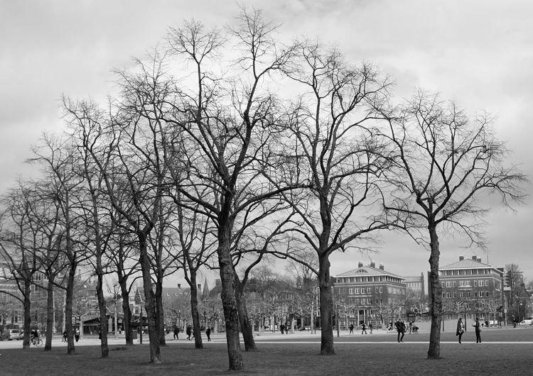 Bare trees in park against buildings in city