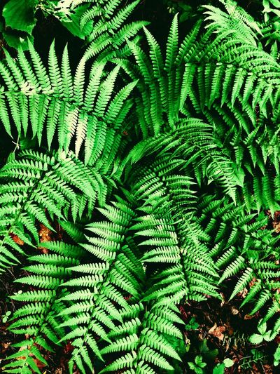 Natur Green Color Nature Green Color Growth Plant Fern Leaf Plant Part Full Frame Backgrounds Nature Beauty In Nature High Angle View No People Tranquility Natural Pattern Day Tree Close-up Outdoors Foliage Lush Foliage