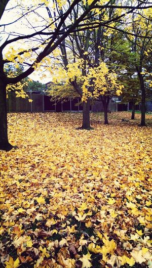 Walking Around with the Dog, leaves everywhere...
