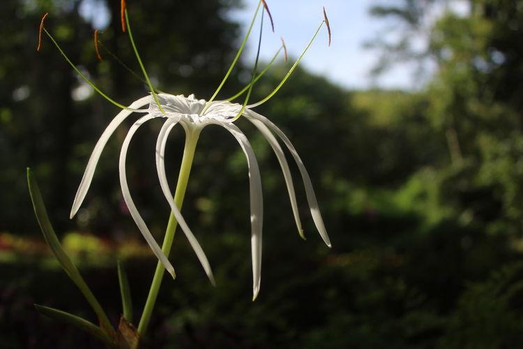 Close-Up Of White Dandelion Flower