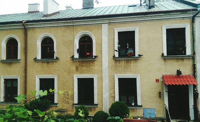 Tenement Houses Fake Birds Htconem8