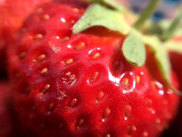 Strawberry macro Red Close-up Freshness Fruit Backgrounds Healthy Eating Abstract Backgrounds Full Frame Water Food And Drink Food Seed Textured  No People Leaf Nature Maximum Closeness 10x Macro Day Macro Macro Photography