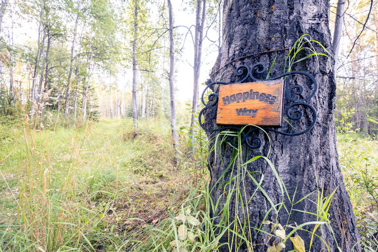 Information sign on tree trunk in forest