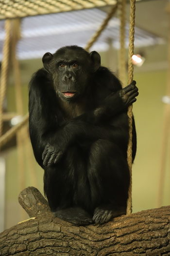 Monkey sitting on rope in zoo