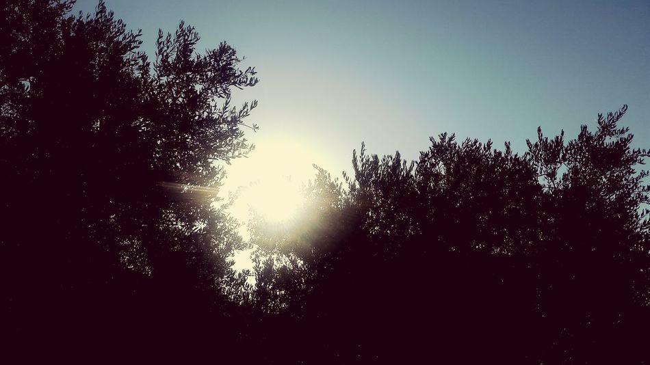 Sun Sun Rays Beautiful Sun ☉☉ ☉🌞🌞☉ ☉ ☉☉☉ ❤❤ Beautiful Nature Nature Collection Nature Nature Photography Beautiful