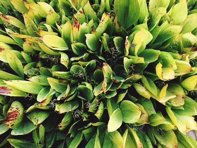 Greens Plant Green Color