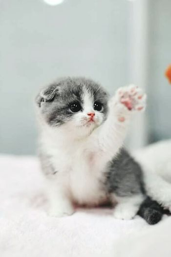 Cute Pets Cute Kitten Cute Kitten hey guys. Meow Meow Check This Out Hello World Hi!