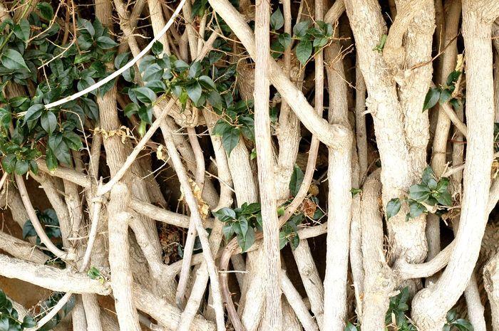 Branch Tree Hiden Treasures Garden Leafs Ramble
